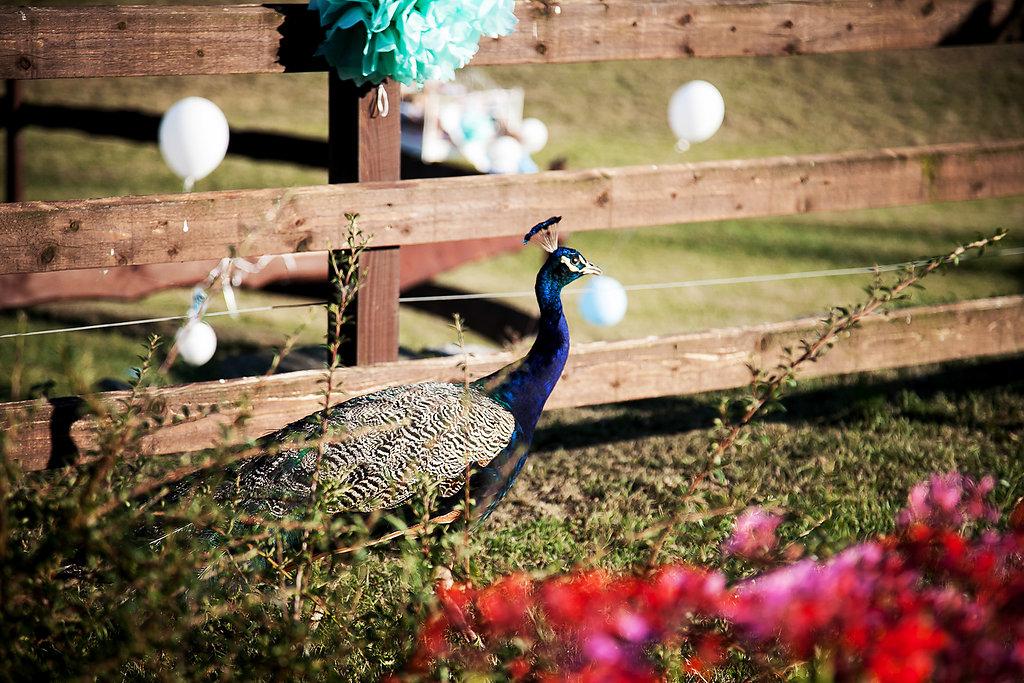 HochzeitsfotosBiancaMarco33web.jpg